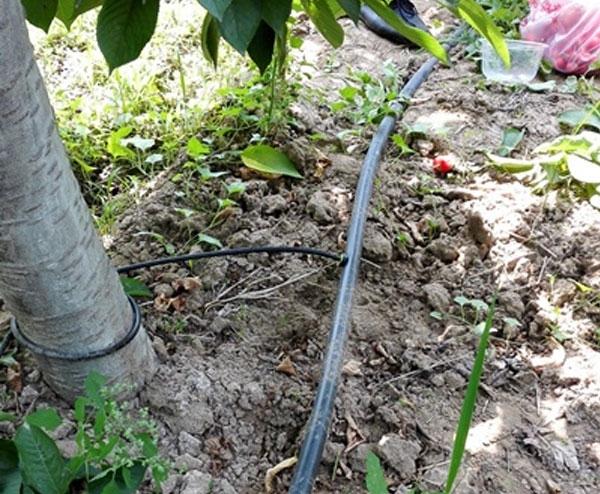 果園灌溉滴灌帶設備水肥