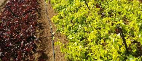果園灌溉設備,膜下滴灌,大棚微噴設備,智能施肥機